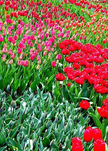 פרחים לנשמה וצבעים טבעיים באמנות | ארט בלוג אומנות